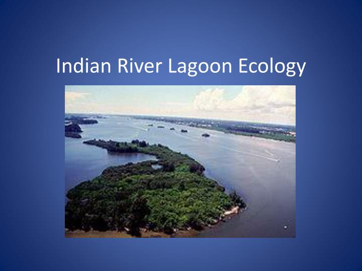 indian river lagoon ecology n.