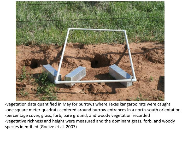 -vegetation data quantified in May for burrows where Texas kangaroo rats were caught