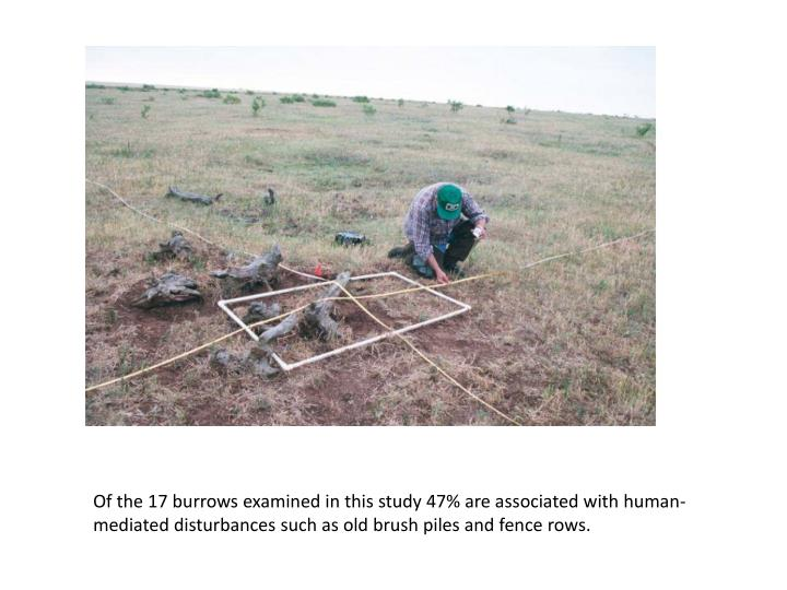 Of the 17 burrows examined in this study 47% are associated with human-mediated disturbances such as old brush piles and fence rows.