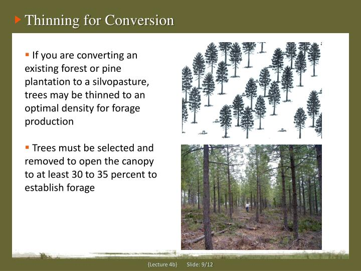 Thinning for Conversion