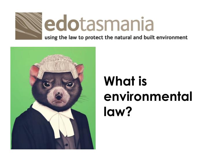 What is environmental law