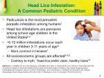 head lice infestation a common pediatric condition
