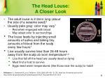 the head louse a closer look