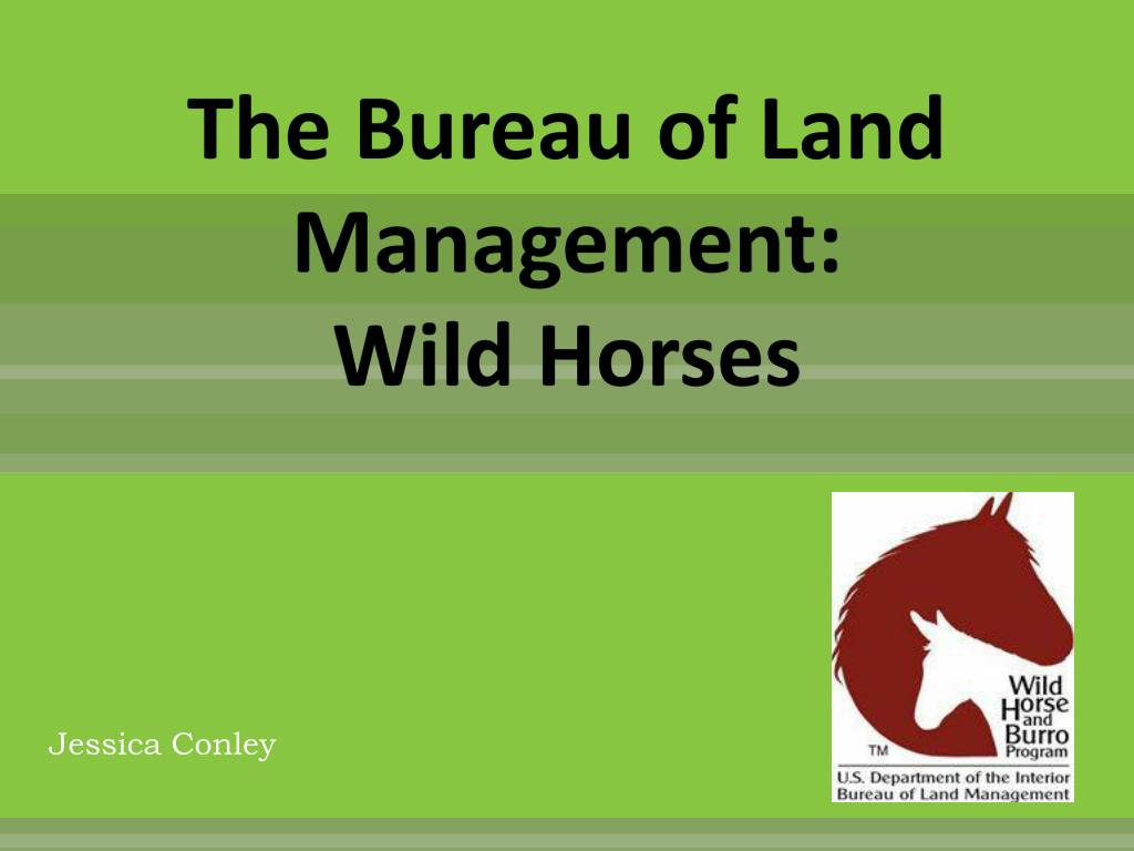 Ppt The Bureau Of Land Management Wild Horses Powerpoint Presentation Id 1572940