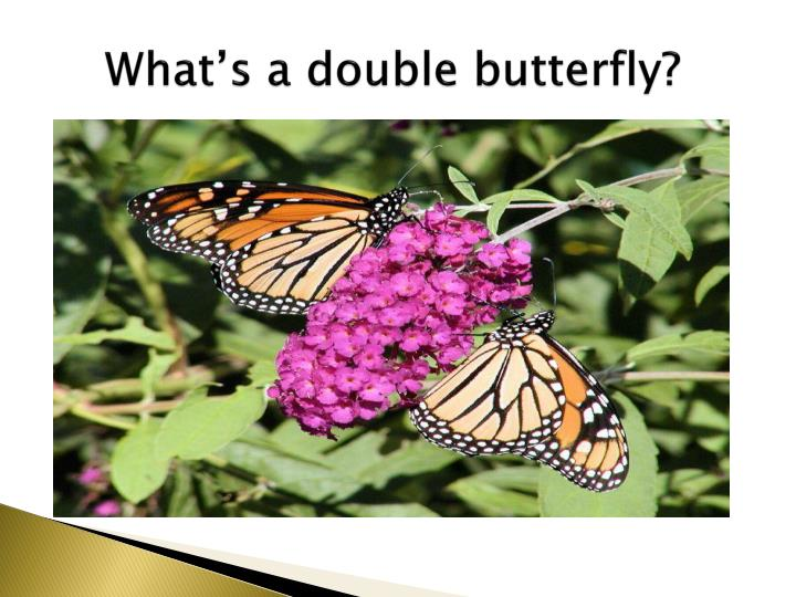 What's a double butterfly?
