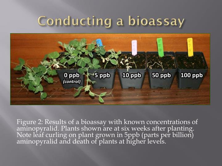 Conducting a bioassay