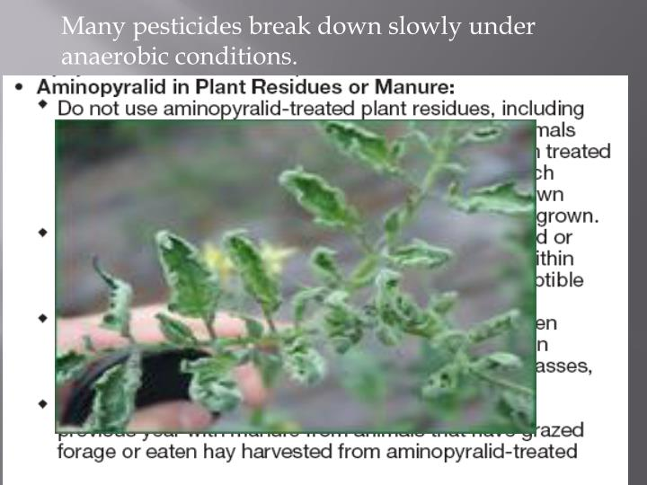 Many pesticides break down slowly under anaerobic conditions.