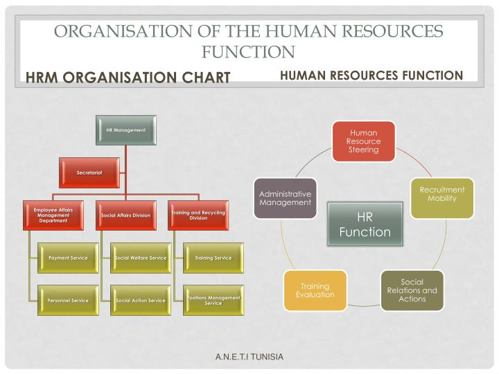 ORGANISATION OF THE HUMAN RESOURCES FUNCTION