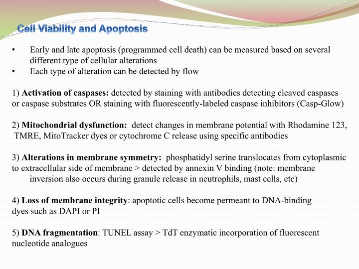 Cell Viability and Apoptosis