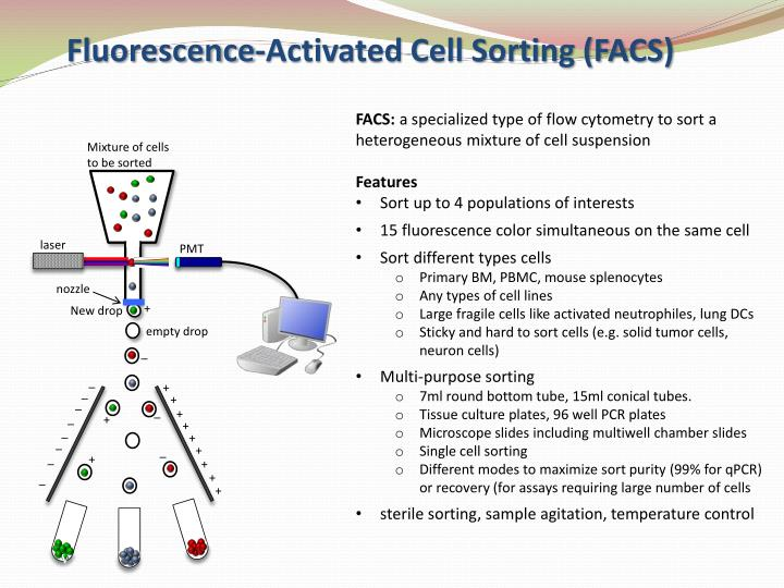 Fluorescence-Activated Cell Sorting (FACS)