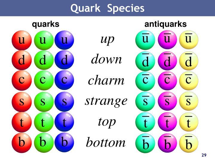 Quark  Species