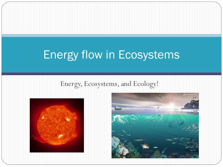 energy flow in ecosystems n.