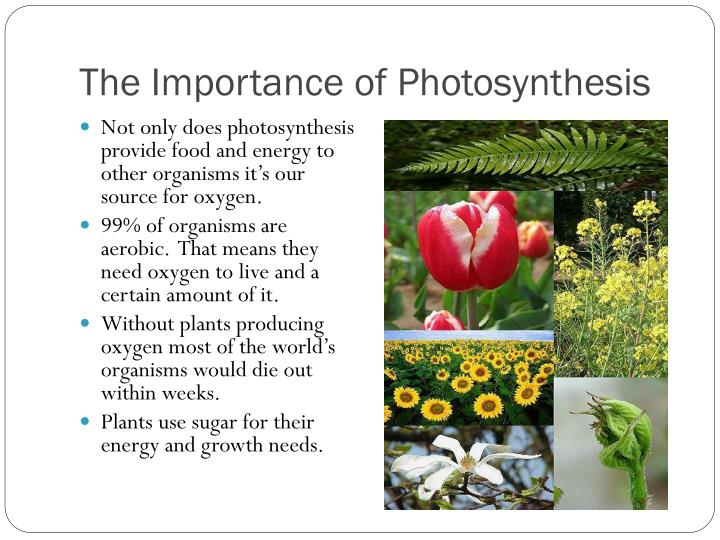 Most Autotrophs Make Food Through The Process Of
