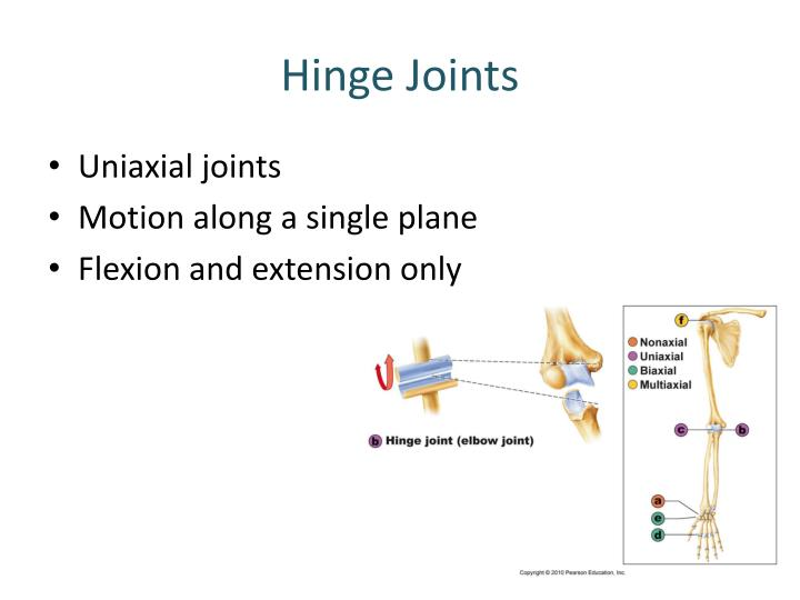 Hinge Joints