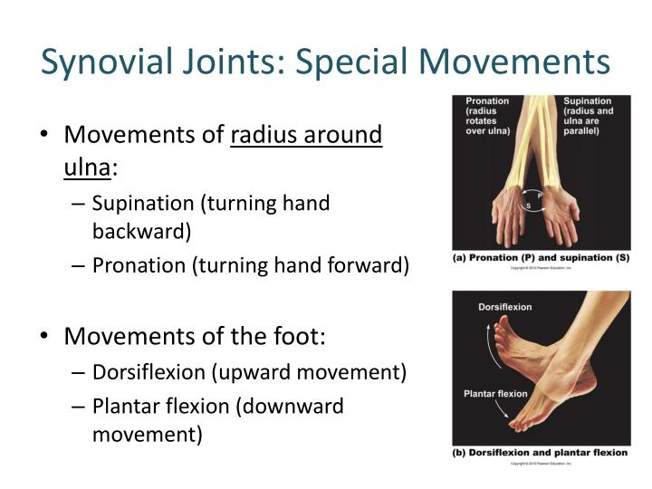 Synovial Joints: Special