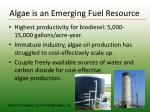 algae is an emerging fuel resource