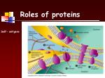 roles of proteins