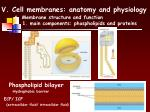 v cell membranes anatomy and physiology