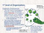 1 st level of organization