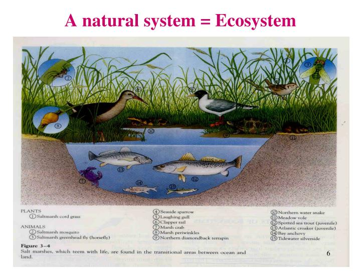 A natural system = Ecosystem