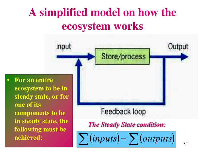 A simplified model on how the ecosystem works