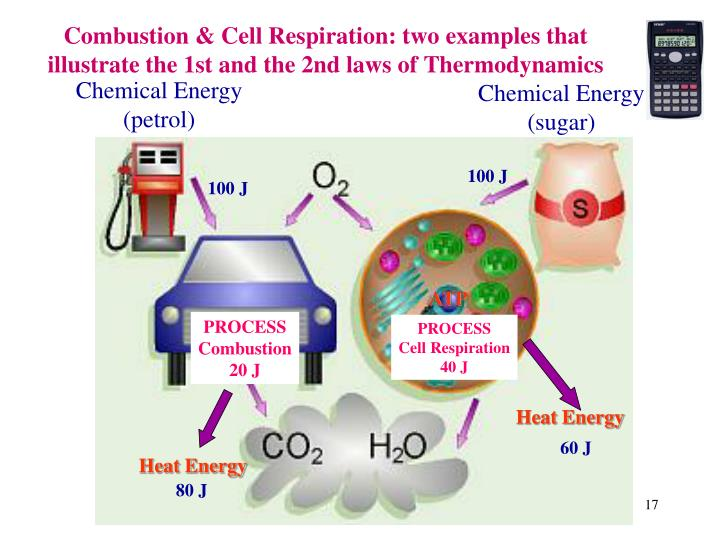 Combustion & Cell Respiration: two examples that illustrate the 1st and the 2nd laws of Thermodynamics