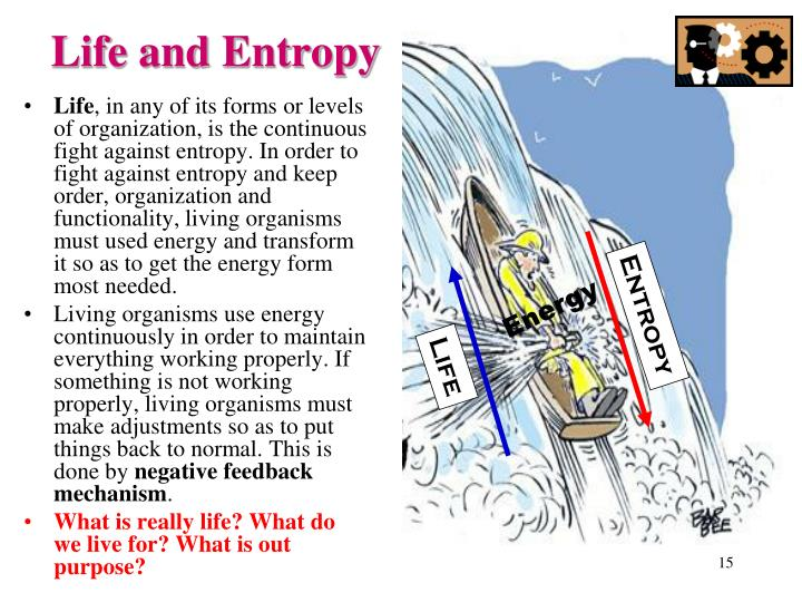 Life and Entropy