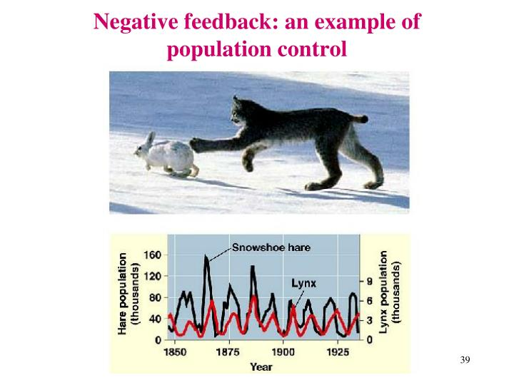 Negative feedback: an example of population control
