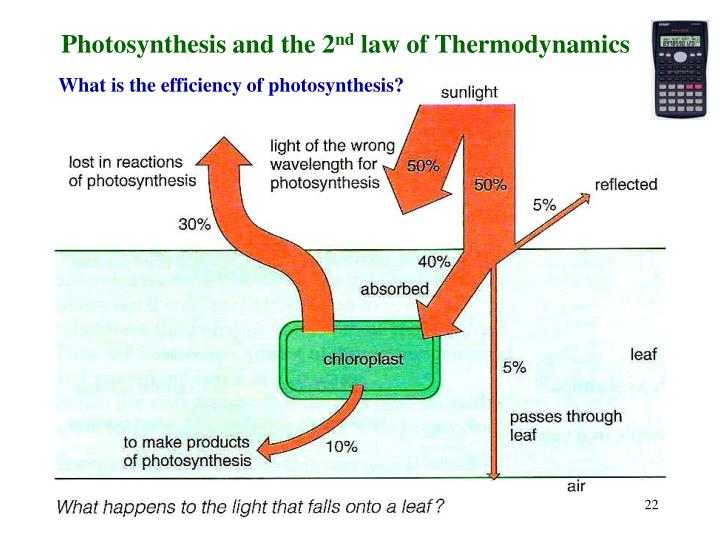 Photosynthesis and the 2