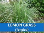 lemon grass tanglad