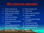 why trees are important