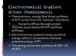electrochemical gradient drives chemiosomosis