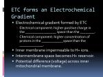 etc forms an electrochemical gradient
