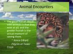 animal encounters1