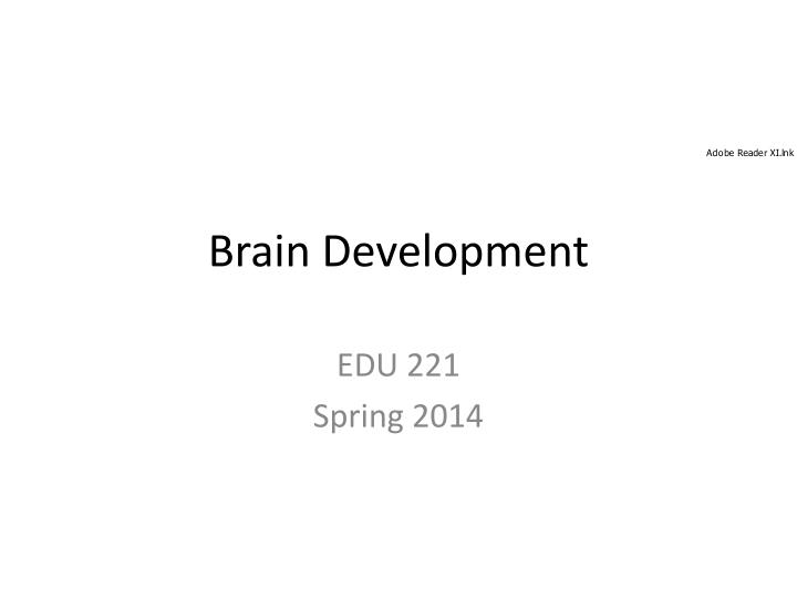 brain development n.