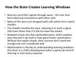 how the brain creates learning windows