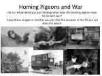 homing pigeons and war