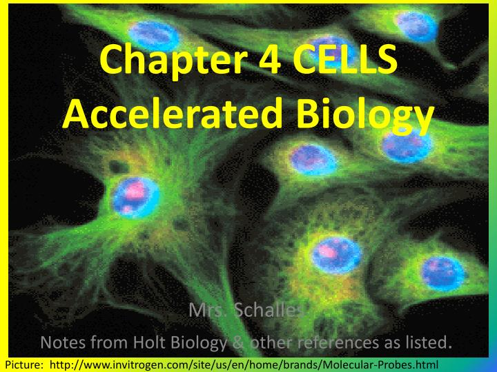 PPT Chapter 4 CELLS Accelerated Biology PowerPoint