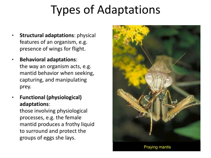 Ppt Adaptations Powerpoint Presentation Id1594839