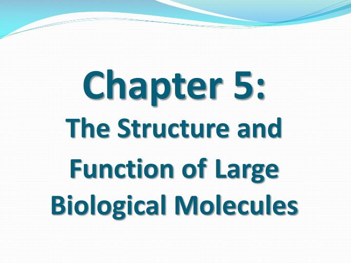 chapter 5 the structure and function of large biological molecules n.