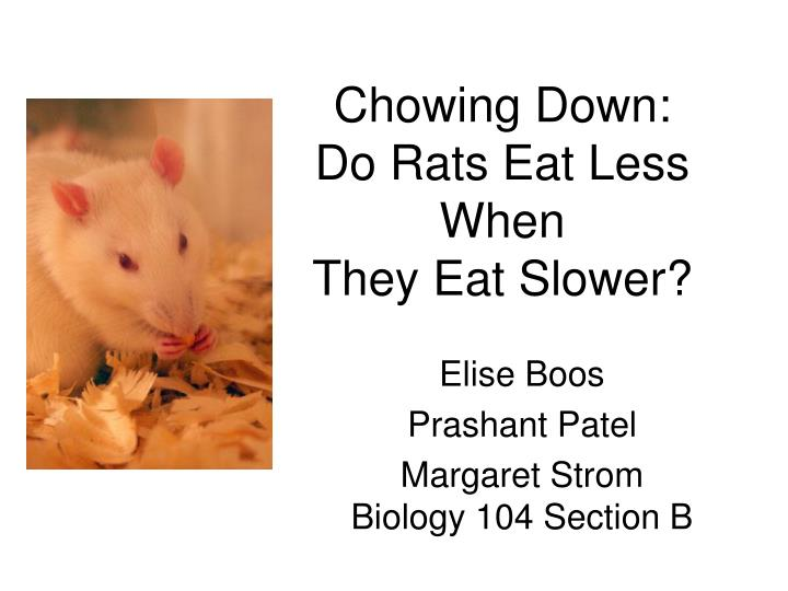 Chowing down do rats eat less when they eat slower