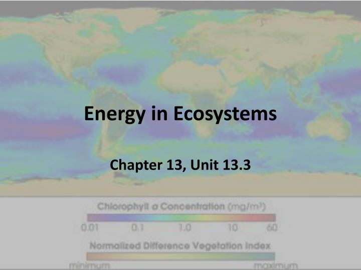 energy in ecosystems n.