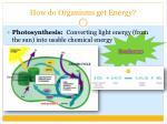 how do organisms get energy