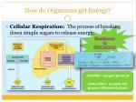 how do organisms get energy1