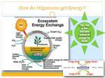 how do organisms get energy2