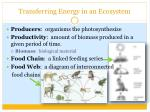 transferring energy in an ecosystem