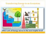 transferring energy in an ecosystem4