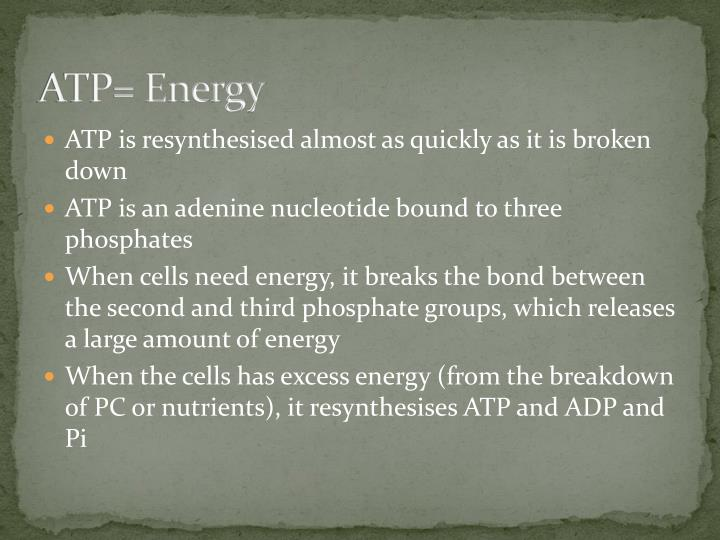 ATP= Energy