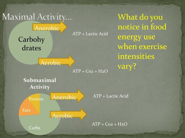 Maximal Activity…