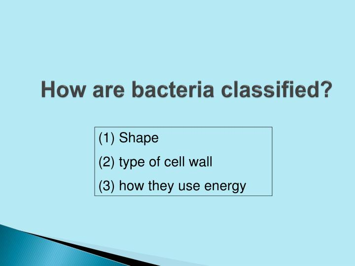 How are bacteria classified?